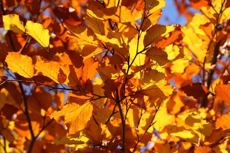 Chelsea Design Quarter Autumn Event